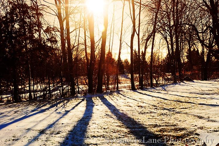winter morning shadows
