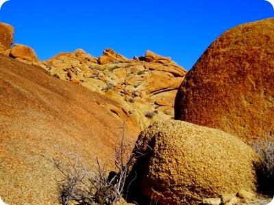 Lost Palms Oasis hike
