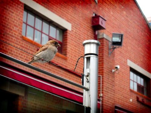 Birdlomo