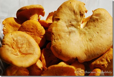 Chanterelles Shireen Jeejeebhoy 2011-06-08