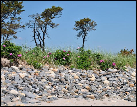 03m - Barrier Beach Trail - rocky dunes