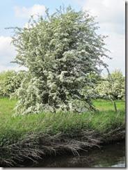 Blossom 003 (480x640)