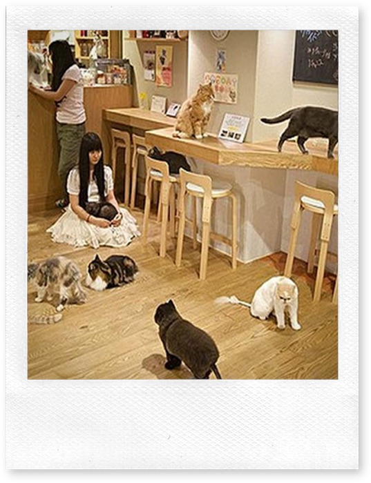 art-Cat-Cafe-Osaka-1