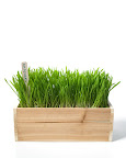 Kitty grass is both yummy and healthy... minimalist kitties seem to like the straight lines and simple look as well.