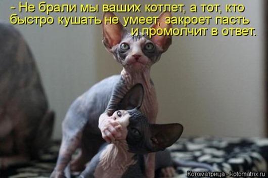 1410530265_kotomatricy-34