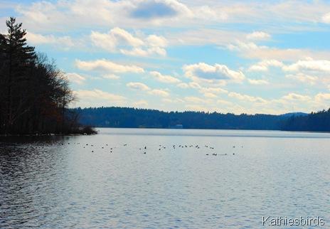 13. N. end Lake Cochichewick-kab