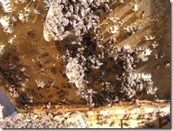 včelky a med květen 140