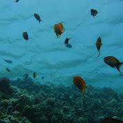 Sharm.jpg
