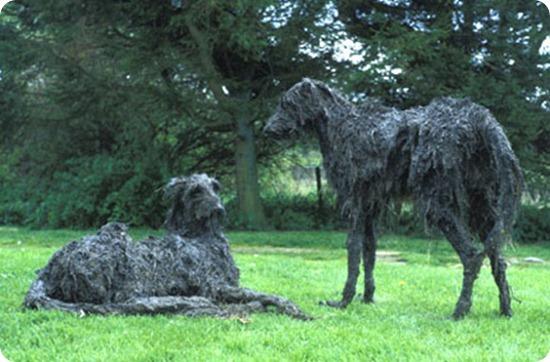 sally matthews dog