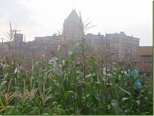 cornfield in downtown detroit