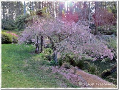 花見@National Rhododendron Gardens