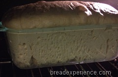 sprouted-wheat-bread 031