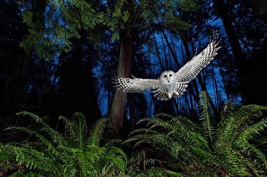 Fotos Vida Selvagem 2013 c
