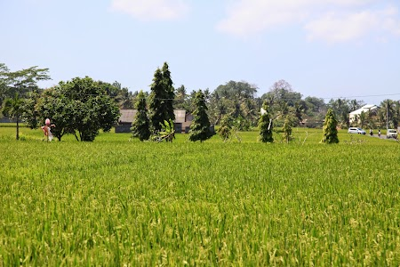 01. Orezarii in Bali.JPG
