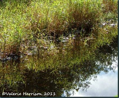 2-reflected-reeds