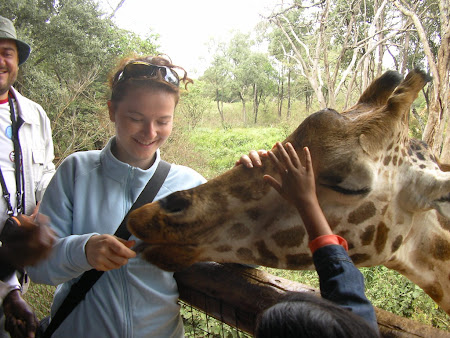 Safari: At the giraffes near Nairobi
