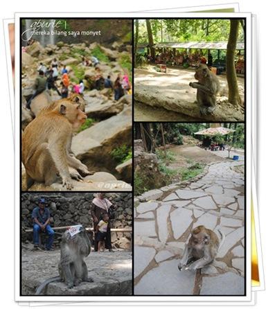 monyet tawangmangu