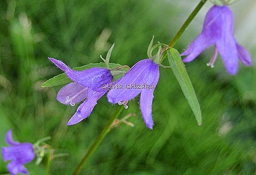Azul - Glória Ishizaka 20