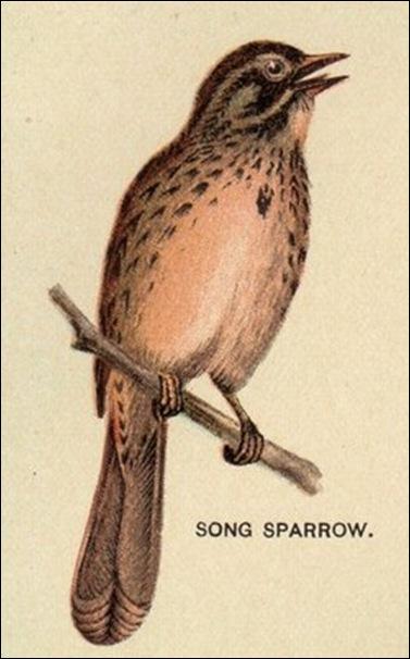 birdsparrow