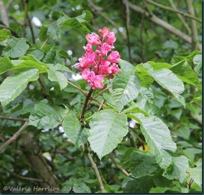 92-tree-flowers