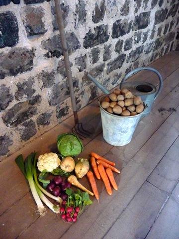 Exempel på köksväxter som funnits i köksträdgården Daniel Grankvist