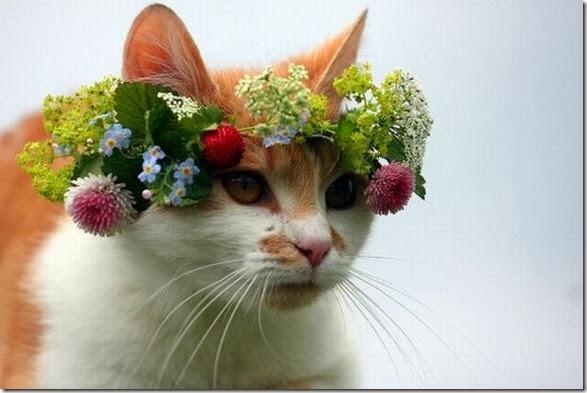 funny-animals-cute-035