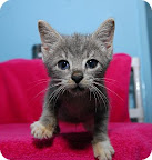 Khal Drogo... waiting to be adopted at The Humane Society of New York.  See link at end of blog post for more details.