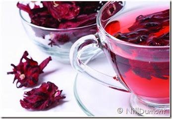 chá de hibisco 06