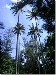 Parque el Chicó