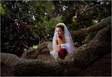 Live Oak Bride