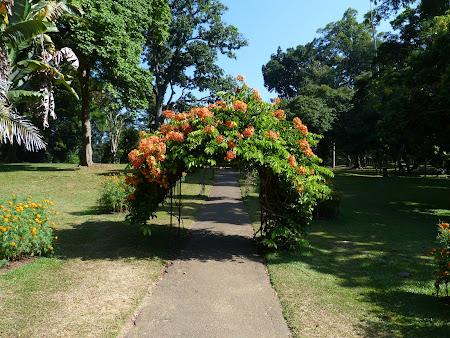 Imagini Sri Lanka: gradina botanica Sri Lanka