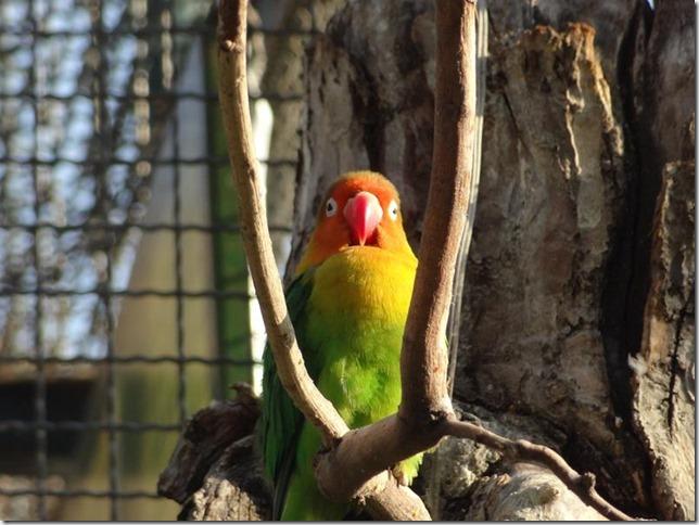 Santiago_Zoo_DSC03709