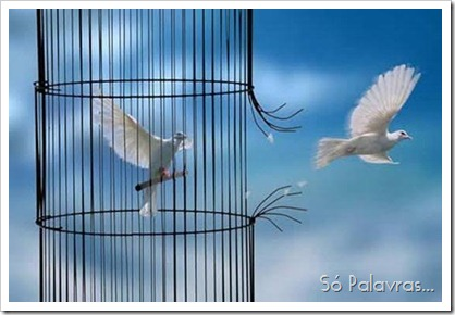 Pomboimhos fugindo da  gaiola -Arnand