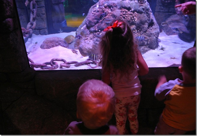 Sea Life Aquarium 056