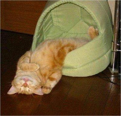 Cats Will Sleep Anywhere 10