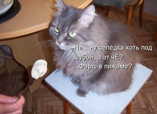 9406848cc3ebb98ea6657b44da6_prev