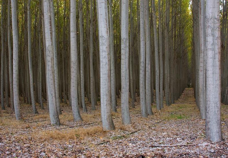 Boardman Tree Farm in ...
