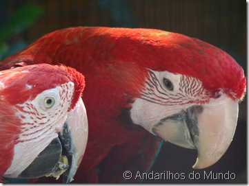 Arara-Vermelha Arara Parque das Aves Foz do Iguaçu BlogTurFoz