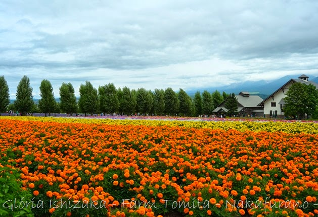 Glória Ishizaka - Farm Tomita 77