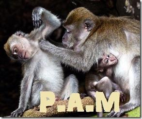 PAM 00