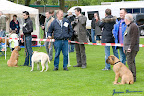 20100513-Bullmastiff-Clubmatch_30849.jpg