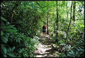 43 - Battleship Rock Trail- Then a nice easy down slope