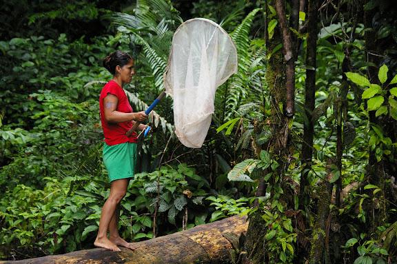 Jeune femme hmong collectant des Morphos. La Source près de Cacao (Guyane). 27 novembre 2011. Photo : J.-M. Gayman