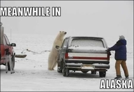 Meanwhile-in-alaska