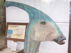 2008.09.10-020 parasaurolophus