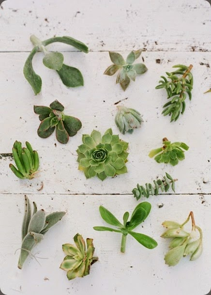 succulents nature composed and jodi miller photolivingwreathworkshop-sugarmagnolias-2