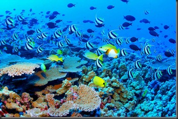 Great_Barrier_Reef_Biodiversity