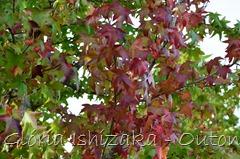 4 - Glória Ishizaka - Folhas de Outono