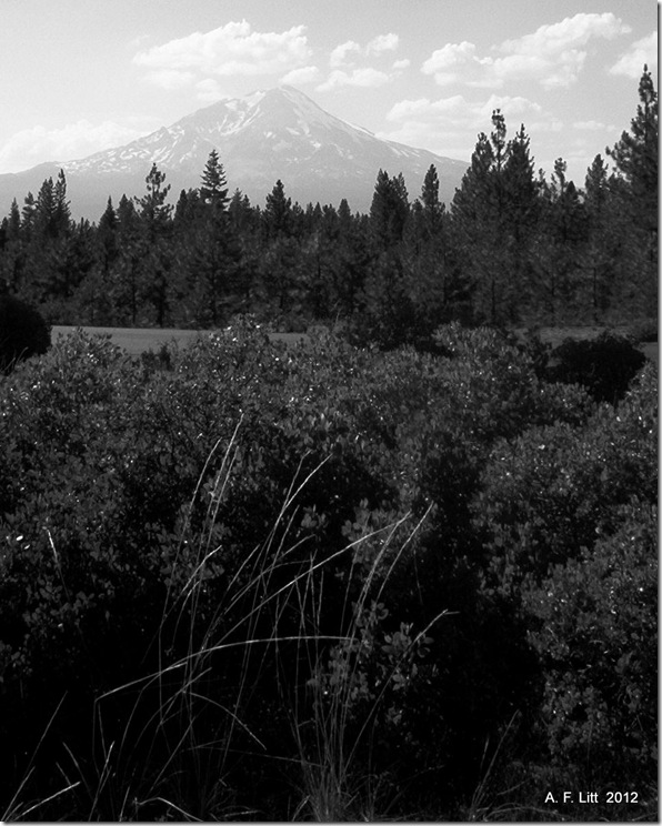 Mt. Shasta.  Highway 89.  California.  July 2004.