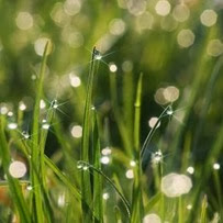 sparkles on grass
